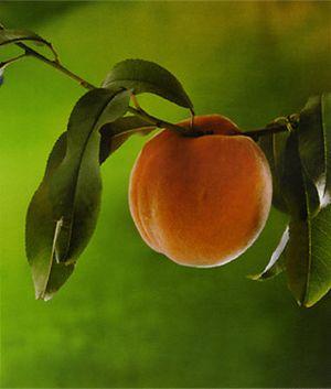 Персик в мифологии