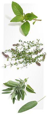 Шалфей Salvia officinalis L.